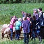 5. Klasse Realschule Mellrichstadt Mai 2013 - Schüler auf der Schafwiese