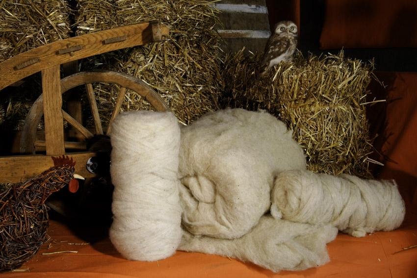Coburger Fuchsschafwolle im Kammzug, naturweiß